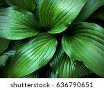 green leaves | Shutterstock . vector #636790651
