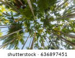 looking up in a jungle of palm... | Shutterstock . vector #636897451
