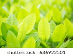 green leaf background blur | Shutterstock . vector #636922501