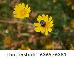 a beetle on a flower | Shutterstock . vector #636976381