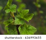 young bright green twig of