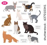 cat breeds icon set flat style... | Shutterstock .eps vector #637010341