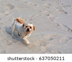Little Dog On The Beach