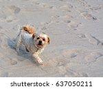 Little Dog On The Beach