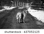 stray dog on a rural road | Shutterstock . vector #637052125