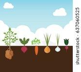 vintage garden banner with root ... | Shutterstock .eps vector #637060525