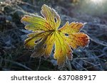 autumn leaf in back light | Shutterstock . vector #637088917