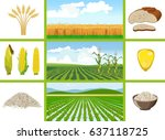 Agricultural Fields   Wheat ...