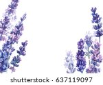 Flowers Lavender  Watercolor ...