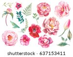 Hand painted floral elements set. Watercolor botanical illustration of eucalyptus, tulip, peony, anemone flowers and leaves. Natural objects isolated on white background