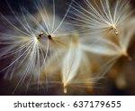 dandelion seeds | Shutterstock . vector #637179655