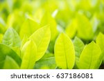 green leaf background blur | Shutterstock . vector #637186081