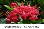 Inflorescence Of Small Red...