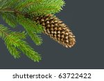 Cone And Pine Twig Isolated