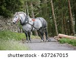 draft horse used for the... | Shutterstock . vector #637267015