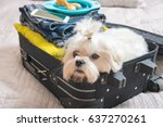 Stock photo small dog maltese sitting in the suitcase or bag and waiting for a trip 637270261