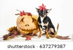 autumn dog | Shutterstock . vector #637279387