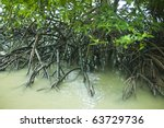 Mangrove Forest And Roots In...