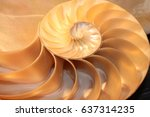 Nautilus Shell Symmetry...