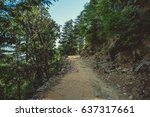 A Path Uphill Through A Pine...