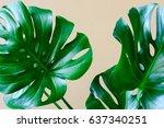 monstera leaves  tropical... | Shutterstock . vector #637340251