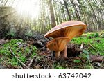 Fish Eye View Of Mushroom In...