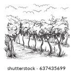 rows of vineyard grape plants... | Shutterstock .eps vector #637435699