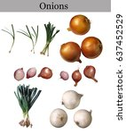 Small photo of variety of onions isolated