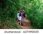 manoa falls  hawaii   february...   Shutterstock . vector #637490035