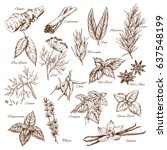 spices and herbs sketches.... | Shutterstock .eps vector #637548199