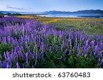 Lupine Meadow   Lake Tahoe ...
