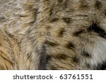 close up of bobcat fur | Shutterstock . vector #63761551