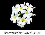 white frangipani flower on... | Shutterstock . vector #637625101
