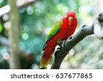 Stock photo bird 637677865