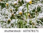 winter in spring  may 2017 ... | Shutterstock . vector #637678171