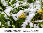 11 may 2017  belarus  snow in... | Shutterstock . vector #637678429
