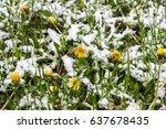 snow in spring  dandelions in... | Shutterstock . vector #637678435