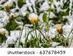 anomalous spring in belarus ... | Shutterstock . vector #637678459