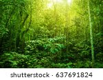 incredible tropical green... | Shutterstock . vector #637691824
