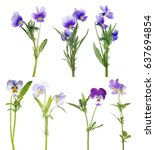 Pansy Flowers Collection...