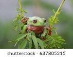 dumpy frog | Shutterstock . vector #637805215