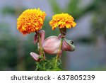 dumpy frog | Shutterstock . vector #637805239