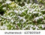 climate change in belarus in... | Shutterstock . vector #637805569