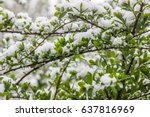 climate change in may in spring ... | Shutterstock . vector #637816969