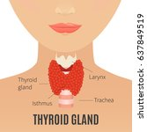 thyroid gland vector... | Shutterstock .eps vector #637849519