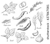 set of spices in sketch style.... | Shutterstock .eps vector #637867081