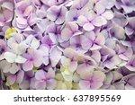 hydrangea flower. abstract...   Shutterstock . vector #637895569