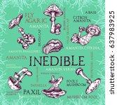 inedible mushroom set with... | Shutterstock .eps vector #637983925