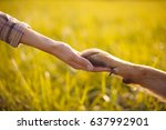 dog paw and human hand ... | Shutterstock . vector #637992901