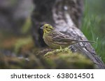 yellowhammer | Shutterstock . vector #638014501